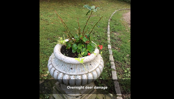 Deer damage? We can help!