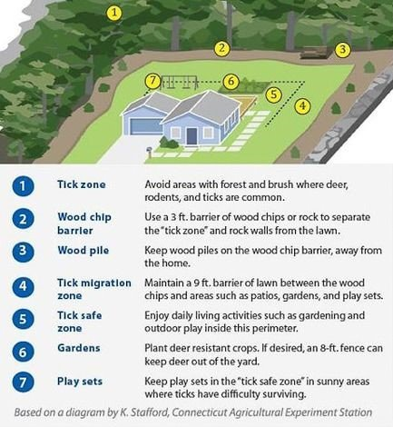 Illustration showing how to set up your yard to prevent ticks